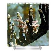 Neck Crab - Macro Undersea Reef Life Shower Curtain