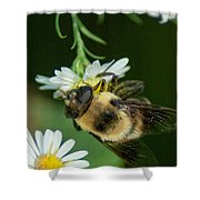 Nectar Collecting Drone Fly  Shower Curtain
