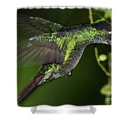 Nectar Feeding Hummingbird Shower Curtain