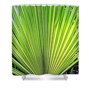 Needle Palm Shower Curtain