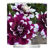 Neighbors Garden Treasures Shower Curtain