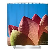 Nelumbo Nucifera Shower Curtain