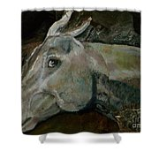 Nephrite's Horses On Stairs Shower Curtain