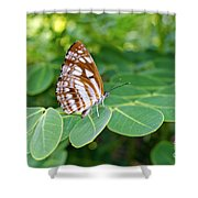 Neptis Hylas / Common Sailer Butterfly Shower Curtain