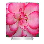 Neptune Hybrid Tea Rose Shower Curtain