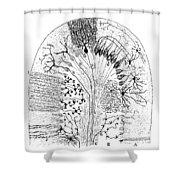 Nerve Cells, 1894 Shower Curtain