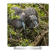 Nest Building Shower Curtain