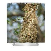 Nest Of Altamira Oriole Icterus Gularis Shower Curtain