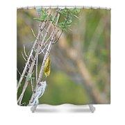 Nest Worrrk Shower Curtain