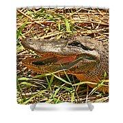 Nesting Alligator Shower Curtain