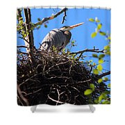 Nesting Great Blue Heron Shower Curtain