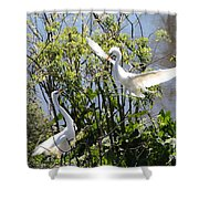 Nesting Great Egrets Shower Curtain