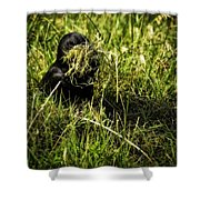 Nesting Material Shower Curtain