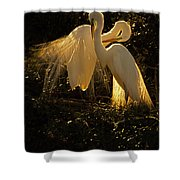 Nesting Pair Of Snowy Egrets Shower Curtain
