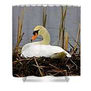 Nesting Swan Shower Curtain