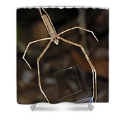 Net-casting Spider Shower Curtain