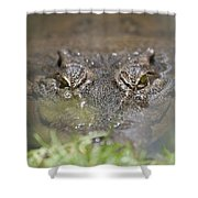 Never Smile At A Crocodile Shower Curtain