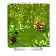 New Baby Ducklings Shower Curtain