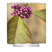 New Berries Shower Curtain