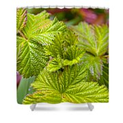 New Black Berry Leaves Shower Curtain