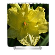 New Born - Lily Shower Curtain