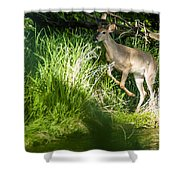New Buck Shower Curtain