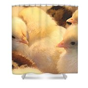 New Chicks Shower Curtain