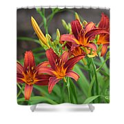 New Daylilies Shower Curtain