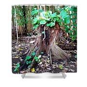 New Emerging Growth Shower Curtain