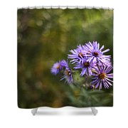 New England Asters Shower Curtain