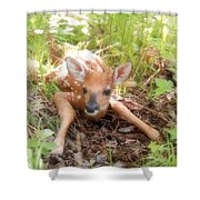 New Fawn In The Forest Shower Curtain