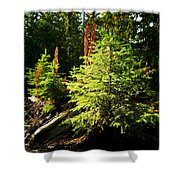New Forest Shower Curtain