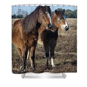New Forest Ponies Shower Curtain