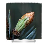 New Growth - Hats Off Shower Curtain