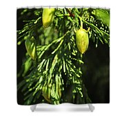 New Growth 25848 Shower Curtain