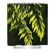 New Growth 25859 Shower Curtain