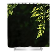 New Growth 25866 Shower Curtain