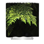 New Growth 25871 Shower Curtain