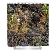 New Growth In A Desolate Area Shower Curtain
