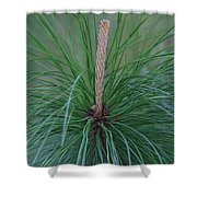 New Growth In Life Shower Curtain