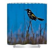New Holland Honeyeater Shower Curtain
