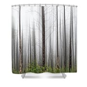 New Jersey Pine Barrens Shower Curtain