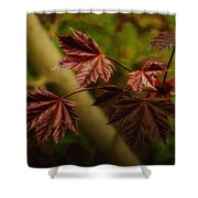 New Leaves For Napanee Shower Curtain