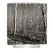 New Mexico Series - Bare Autumn Bw Shower Curtain