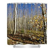 New Mexico Series -  Bare Autumn Shower Curtain