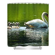 New Mute Swan Family In May Shower Curtain