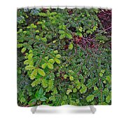 New Needles At Lobster Cove In Rocky Harbour-nl Shower Curtain