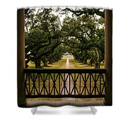 New Orleans Live Oak Shower Curtain