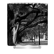 New Orleans Oaks Shower Curtain