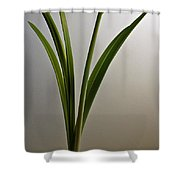 An Emerging Amaryllis Shower Curtain